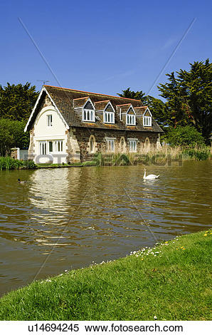 Stock Image of England, Cornwall, Bude. A swan on Bude Canal at.