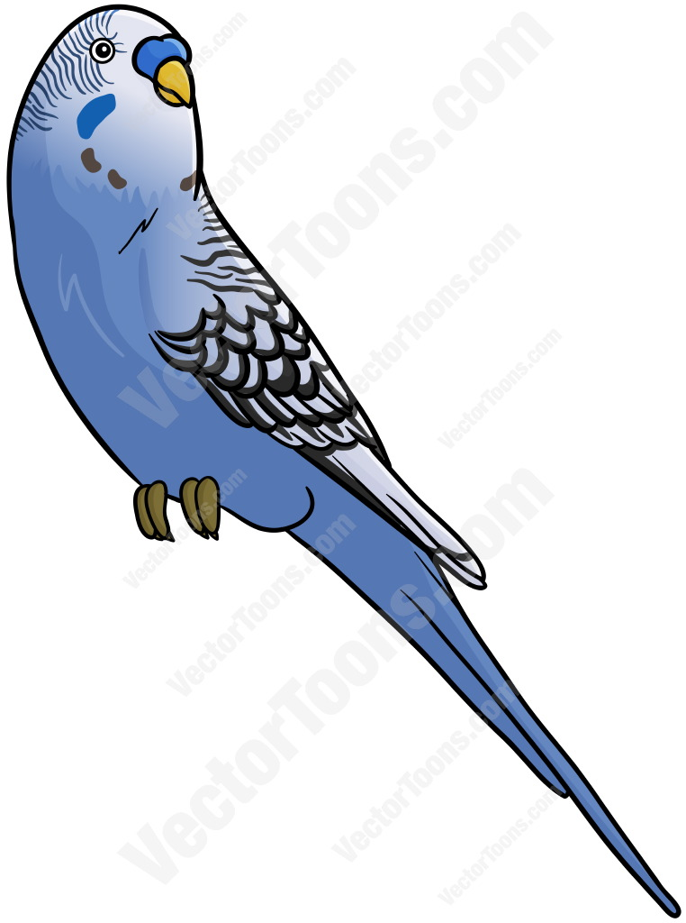 Blue Budgie Cartoon Clipart.