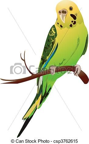 Budgerigar Clip Art and Stock Illustrations. 80 Budgerigar EPS.