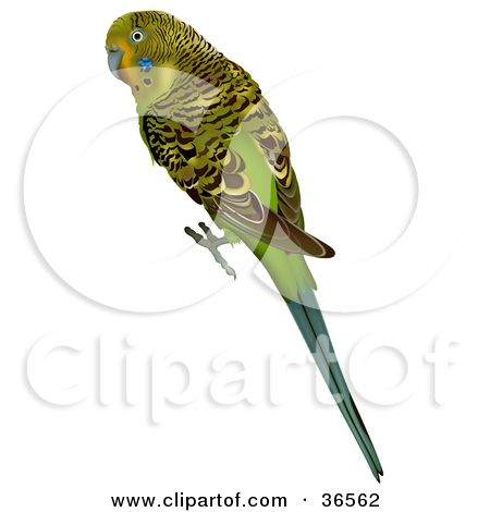 Clipart Illustration of a Green Budgerigar, Shell Parakeet, Or.
