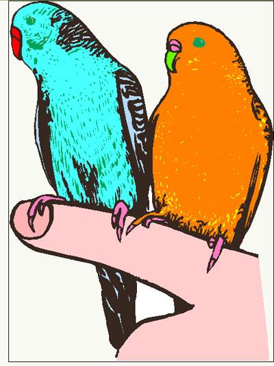 Budgerigar Parakeet Clipart on Open Mouth Clip Art