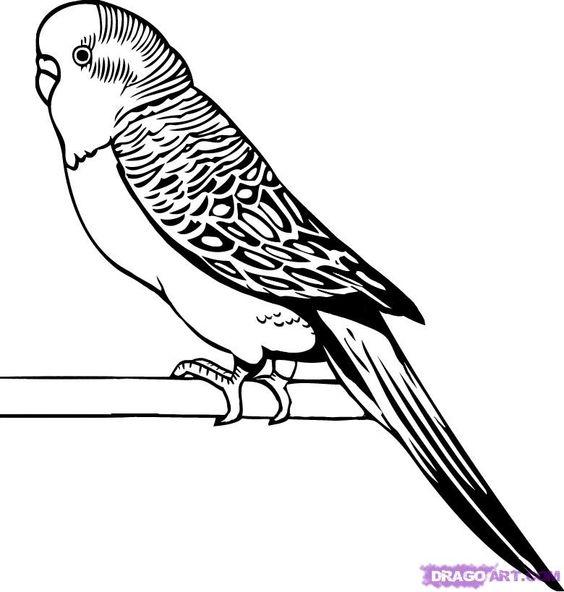 parakeet line drawings.