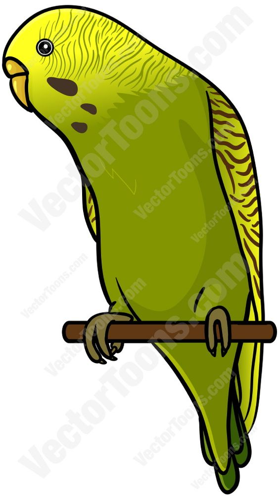 Green And Yellow Budgie Perched On A Stick.
