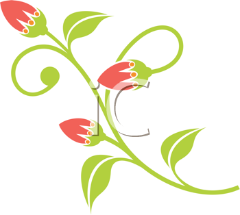 Clipart Image of Flower Buds Opening.