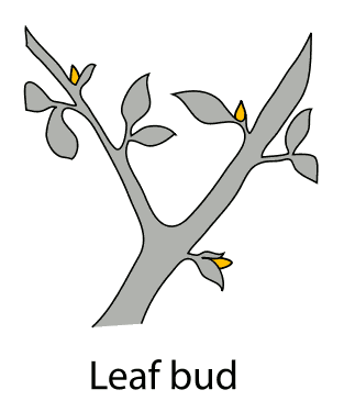 Buds clipart.