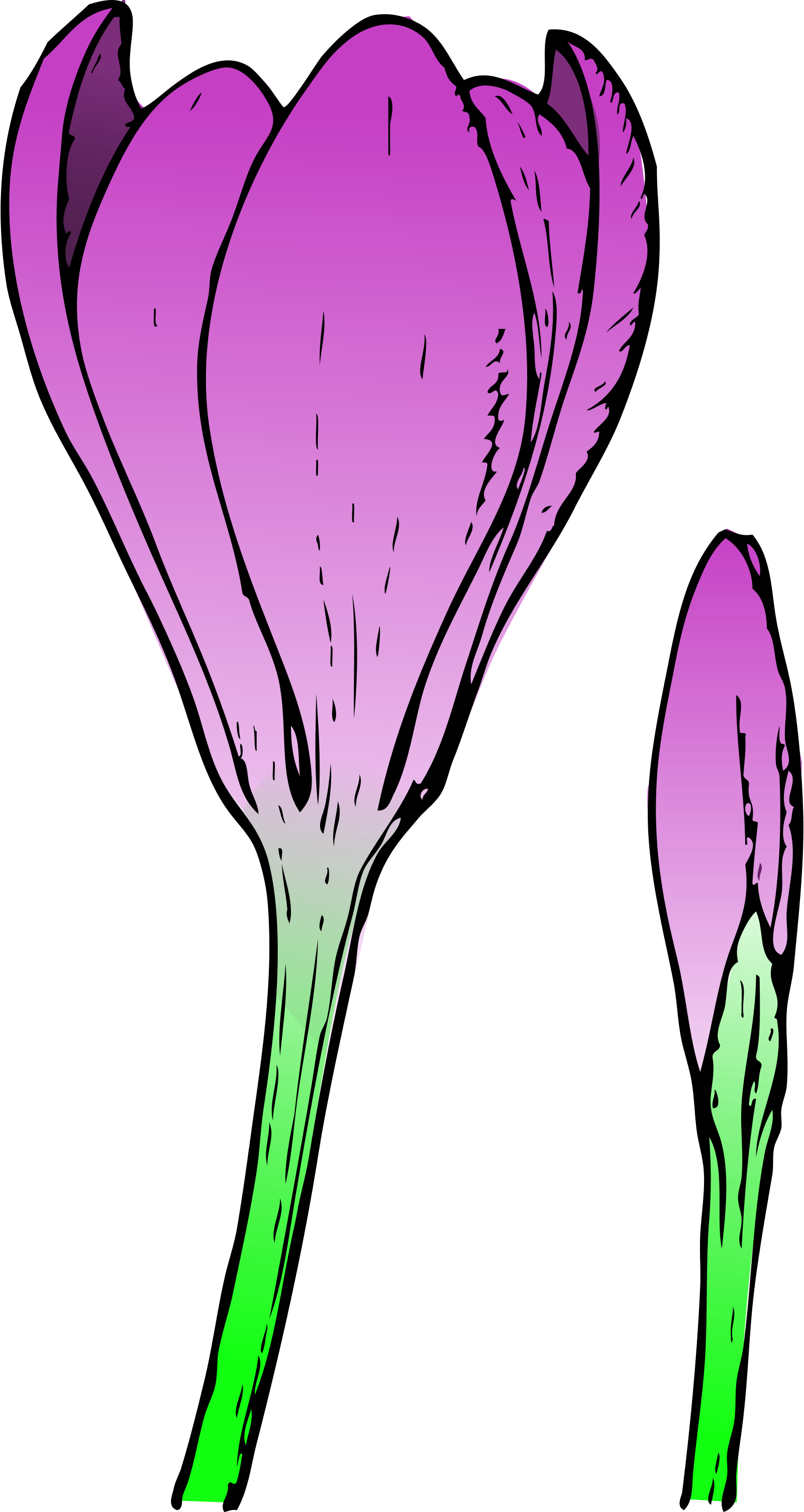 Flower buds clipart.