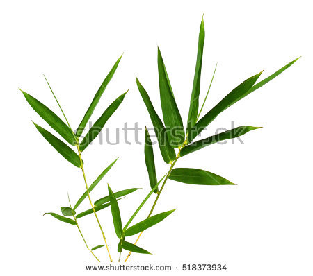 "dried Bamboo Leaves"" Stock Photos, Royalty."