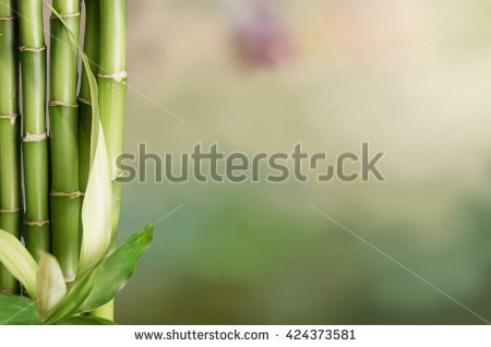 Bambu Stock Photos, Royalty.