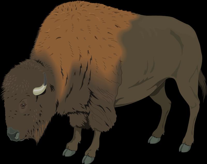 American bison Deer Clip art.