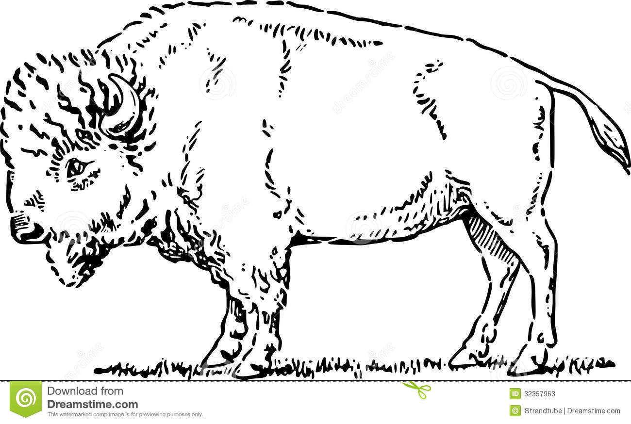 Buffalo Black And White Clip Art.