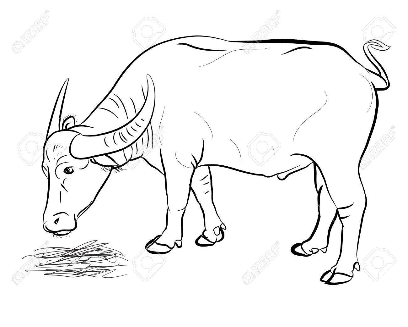 Vector of buffalo eating hay isolated on white baclground.