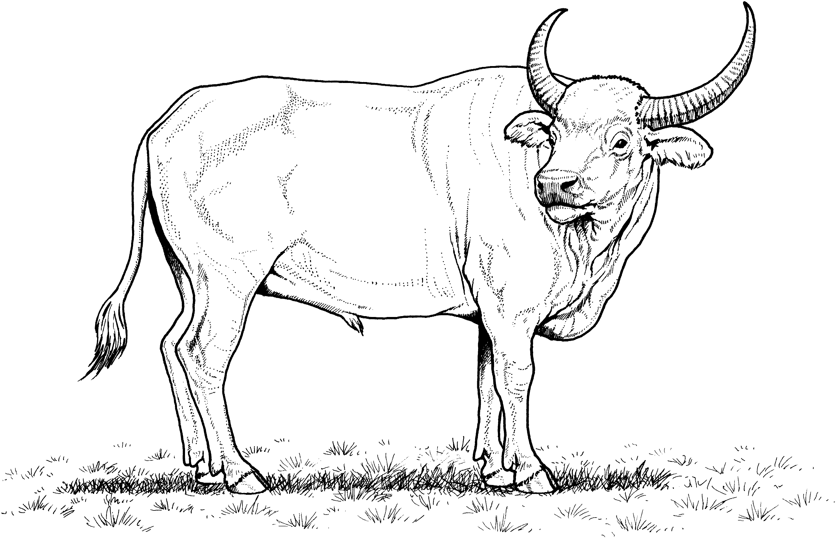Buffalo Clipart Black And White (101+ images in Collection) Page 2.