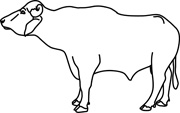 buffalo clipart outline 20 free Cliparts | Download images ...