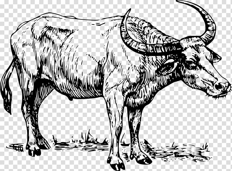Water buffalo Drawing , bison transparent background PNG clipart.