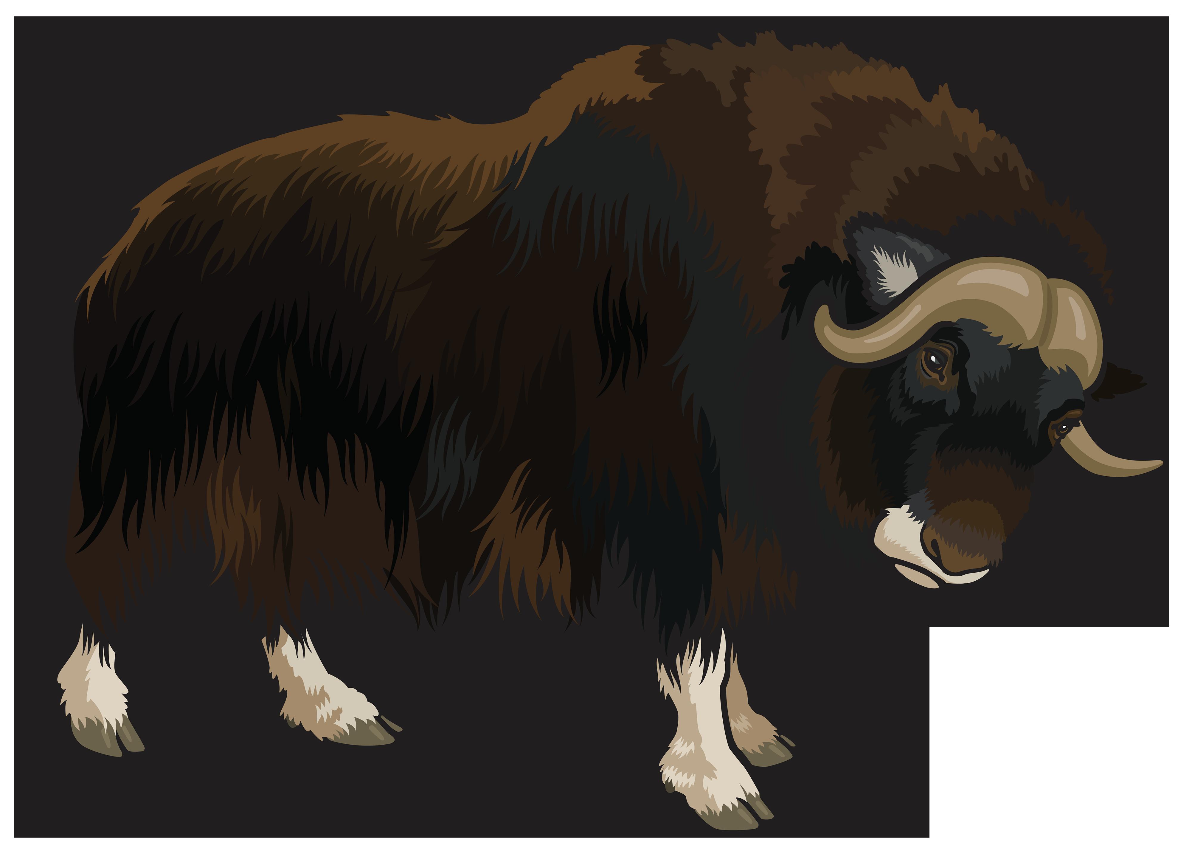 Buffalo PNG Clipart.