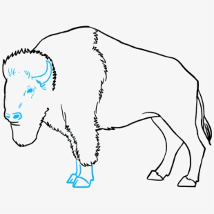 How To Draw Buffalo.