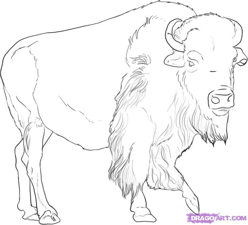 Free Buffalo Outline, Download Free Clip Art, Free Clip Art.