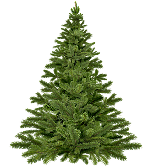 4,000+ Christmas Tree Images & Pictures [HD].