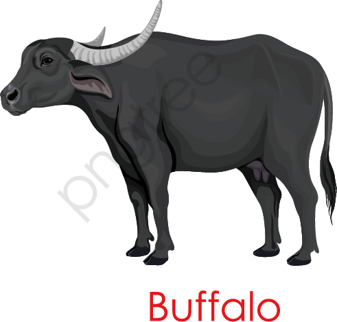 Black Buffalo, Black, Buffalo, Ox Horn PNG and Vector with.