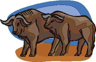 Buffaloes Clip Art.