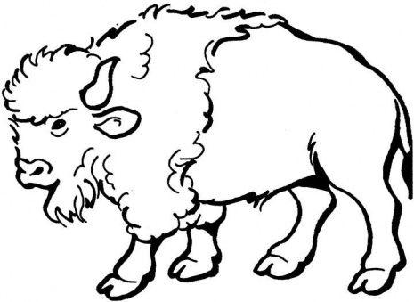 Buffalo Clip Art & Buffalo Clip Art Clip Art Images.