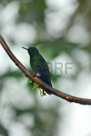 Buffy Stock Photos Images. Royalty Free Buffy Images And Pictures.