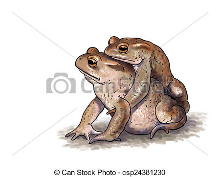 Drawings of Toad amplexus.