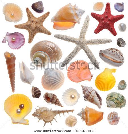 Snail seashell free stock photos download (184 Free stock photos.