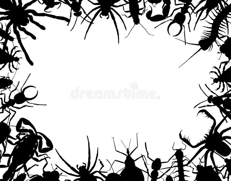 Border Bug Stock Illustrations.