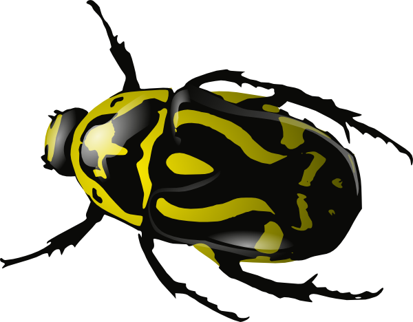 Bug insect clipart - Clipground