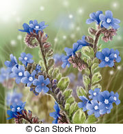 Bugloss Illustrations and Clipart. 4 Bugloss royalty free.