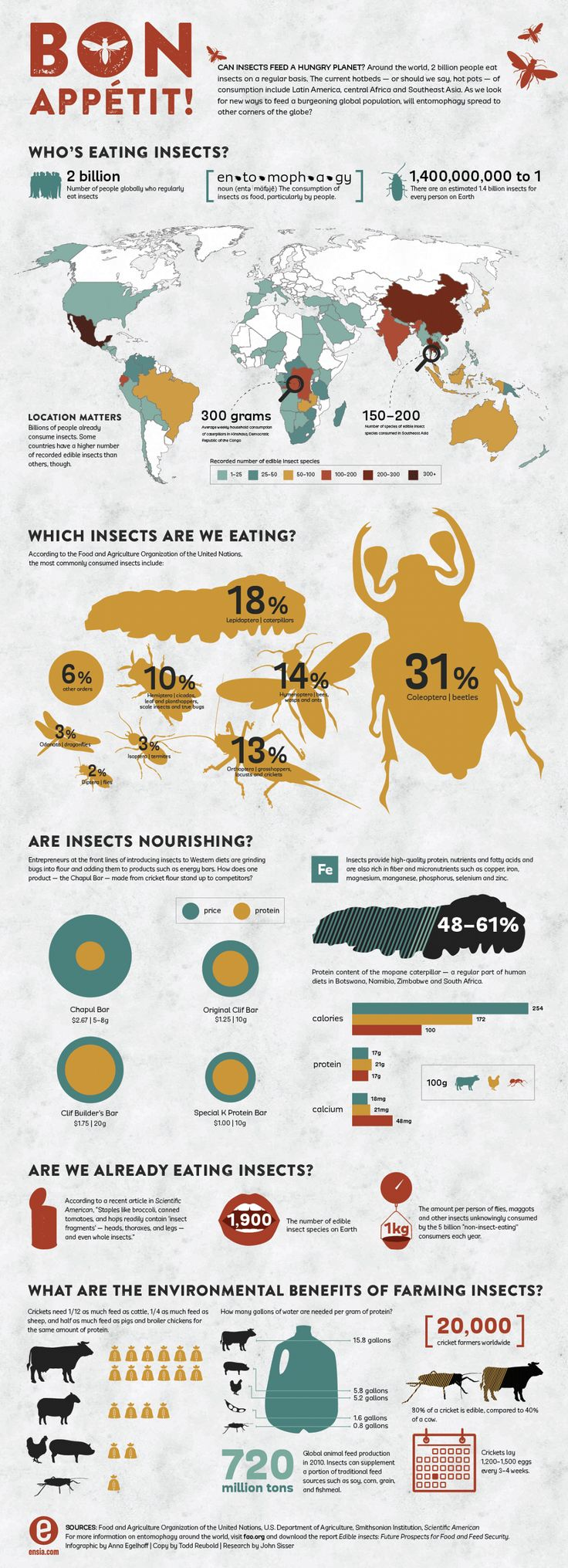 25+ best ideas about Edible Insects on Pinterest.