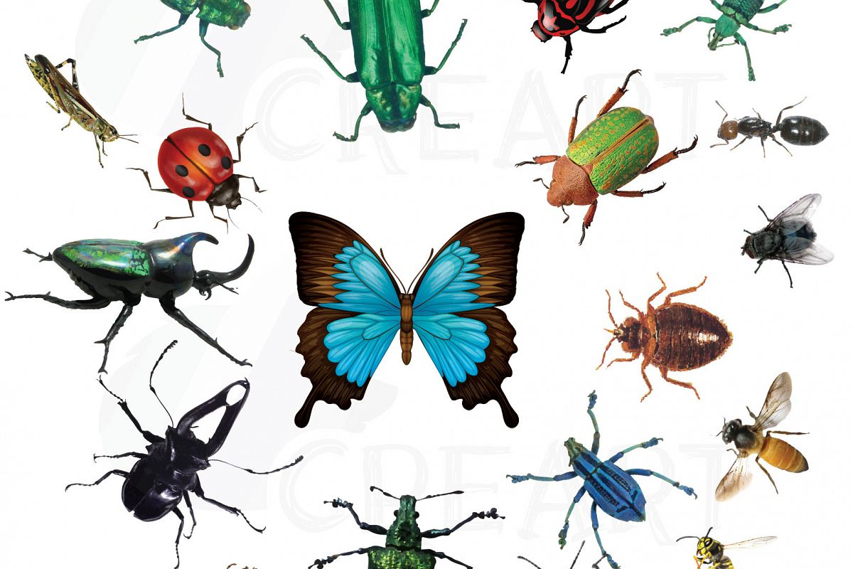 Watercolor insects and bugs clipart pack, vectors for commercial or  personal use (vector, png, jpg, silhouette studio files). Lady bug, bee.
