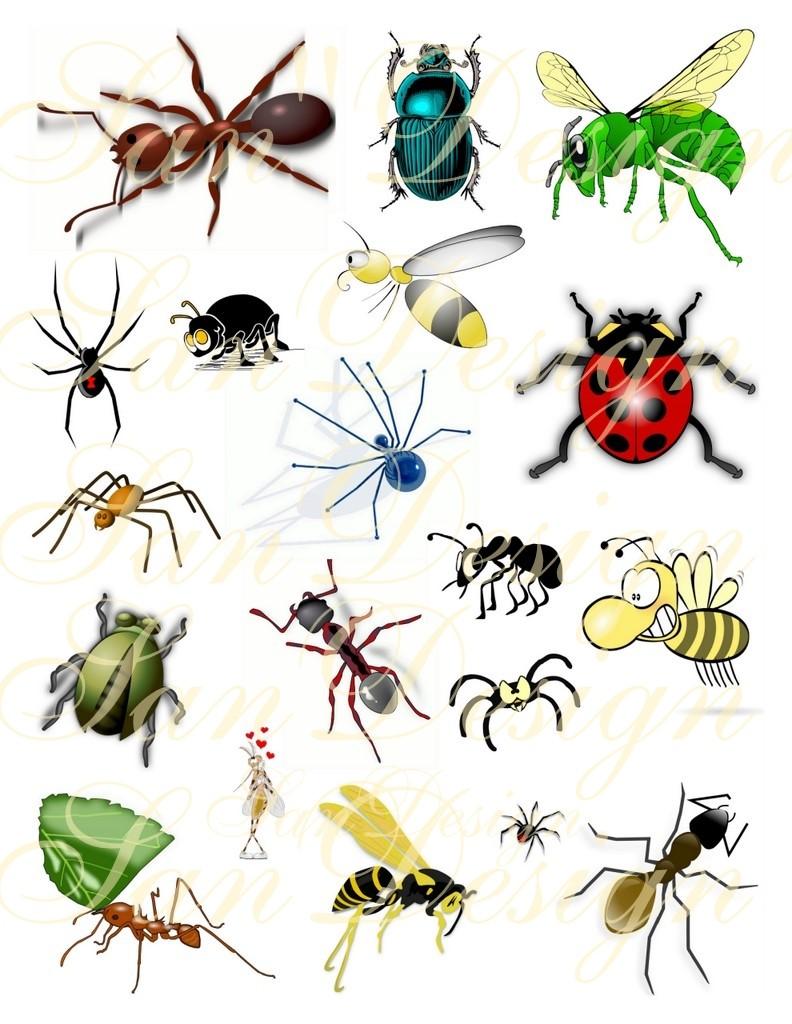 Bugs Clipart & Bugs Clip Art Images.