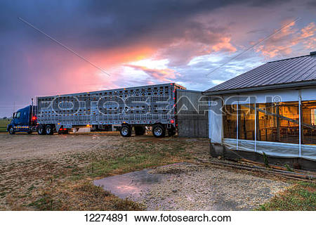Stock Photography of Livestock trailer backed up to a hog.