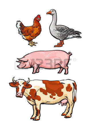 20,074 Livestock Stock Illustrations, Cliparts And Royalty Free.