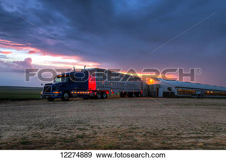 Stock Photograph of Livestock trailer backed up to a hog.