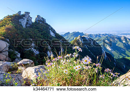 Stock Photography of Flowers on Bukhansan mountains, South Korea.