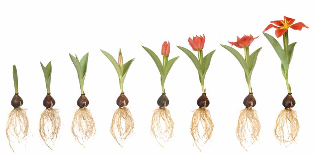 Stages Of Seeds Clipart.