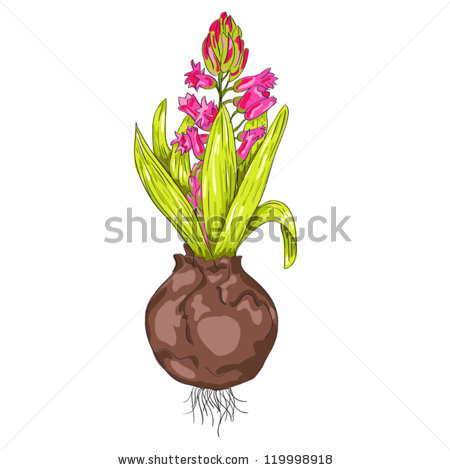 Bulb Flower Stem Clip Art.