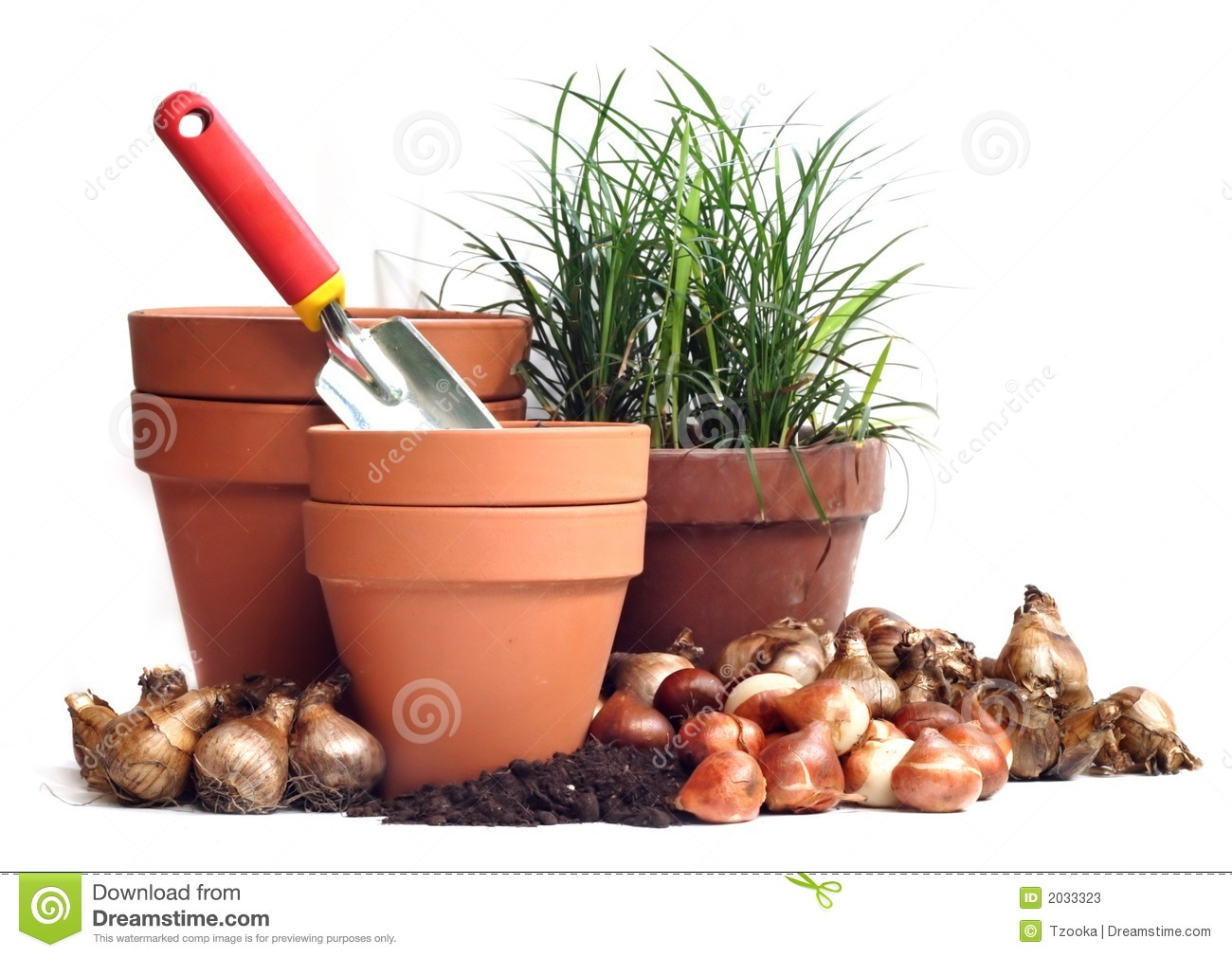 Flower bulbs clipart.