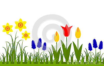 Daffodil And Tulip Floral Border Stock Photo.
