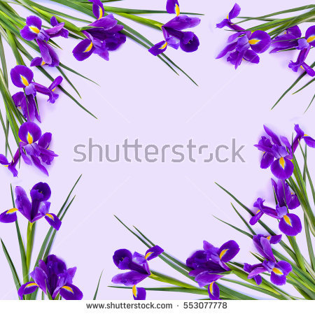 Bulbous Irises Stock Photos, Royalty.