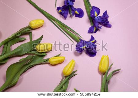 Japanese Iris Stock Photos, Royalty.