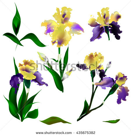Purple And Yellow Iris Stock Photos, Royalty.