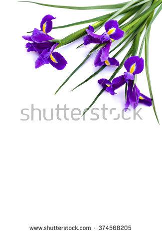 Iris Stock Photos, Royalty.