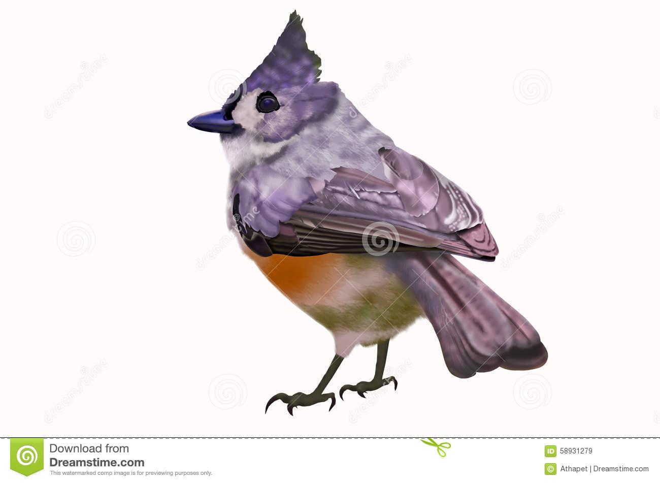 Bulbul Bird Stock Illustrations.