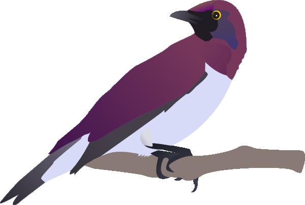 Exotical Bird Clip Art at Clker.com.