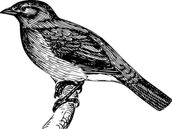 Bulbul clip art Free vector in Open office drawing svg ( .svg.