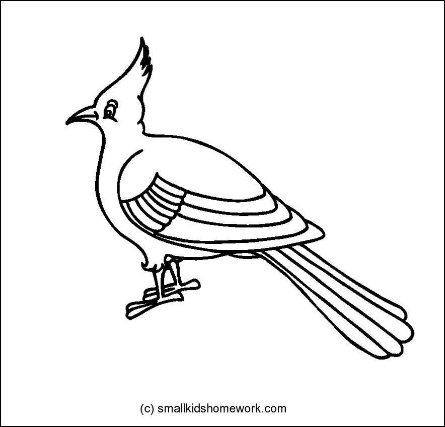 Bird Outline Drawing.